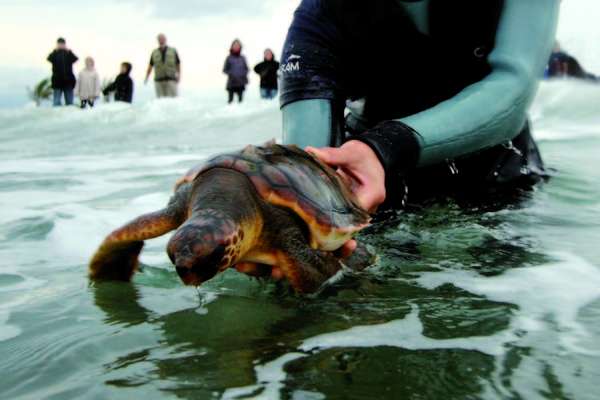 Rescue and assistance to marine fauna